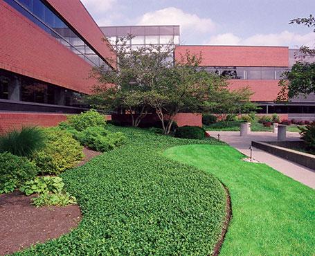 Commercial landscape maintenance greensboro nc for Professional garden maintenance