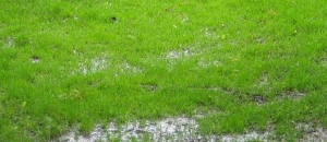 Irrigation System Standing Water